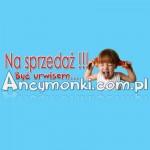 Ancymonki.com.pl idą pod młotek