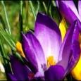 W dniu dzisiejszym rozpoczyna się astronomiczna wiosna !!! W tym roku zima dała nam w kość co spowodowało, że mało kto będzie za nią tęsknić. Wszyscy już mamy przed oczami […]
