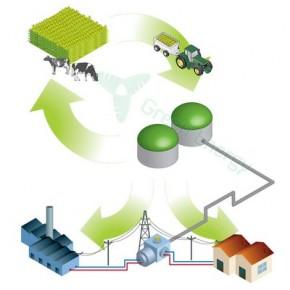 Czy w Poniatowej powstanie biogazownia