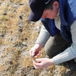 Zgłaszanie strat w uprawach rolniczych w Poniatowej